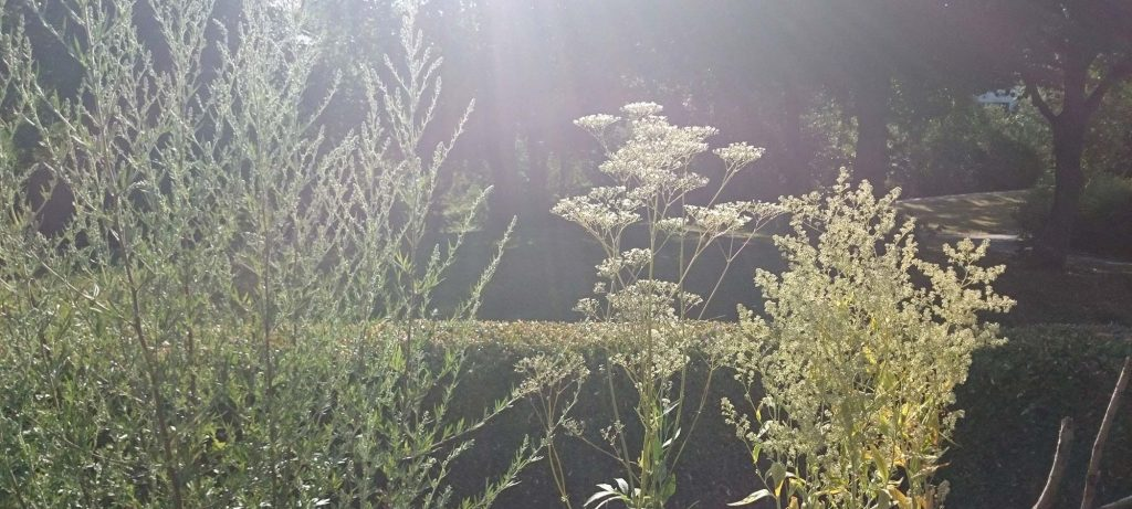Der Kräutergarten am Morgen